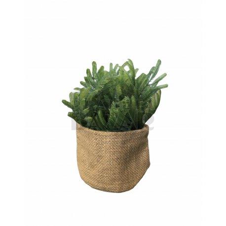 Plantin De Arpillera 19 cm