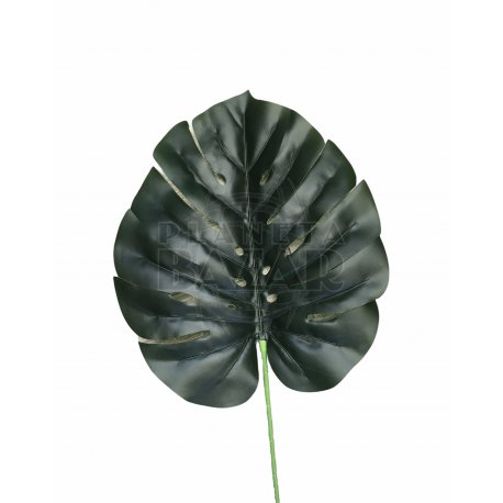 """Hoja Verde """"Costilla De Adan"""" Grande 85 cm"""
